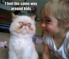 I feel the same way around kids #catoftheday