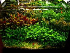 8g nano planted dutch tank