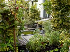 On a roof in the fashionable arrondissement, landscape architect Camille Muller designed a roof garden with trellised apple and pear trees, untamed raspberry bushes, and horsetails growing beside a miniature pond. Photograph by Marion Brenner. Diy Pergola, Metal Pergola, Pergola Ideas, Pergola Kits, Camille Muller, Paris Rooftops, Fibreglass Roof, Small Courtyards, Rooftop Garden