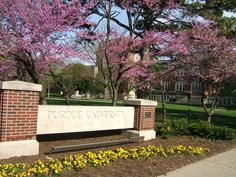 Love the blossoms around campus in the springtime!