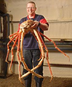 Ecco Crabzilla !  Il Granchio di 3,5 metri, più grande mai pescato al mondo !
