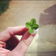 Lucky clover :)