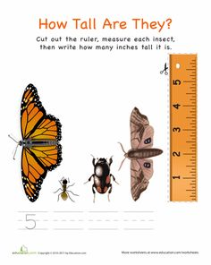 Worksheets: Measuring with a Ruler: Insects!