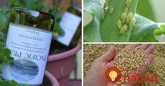 Geniálne triky pre vašu záhradu, ktoré by ste mali rozhodne poznať! Rarity, Succulents, Garden, Terrarium, Ale, Compost, Terrariums, Garten, Lawn And Garden