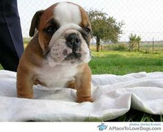 """""""I am guarding the blankie; have a problem with that?"""""""