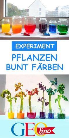Nur grün ist langweilig? Färbt eure Pflanzen bunt! Wie das funktioniert, verrät euch natürlich GEOlino! #basteln #experimentieren #pflanzen #kinderexperiment #diy #schule