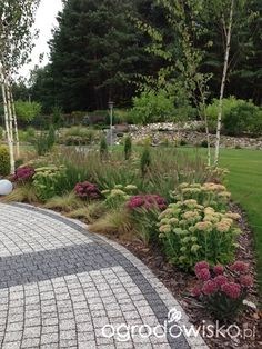 Roztoczańskie klimaty - strona 534 - Forum ogrodnicze - Ogrodowisko