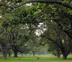 Pecan Orchard Pecan, Plants, Summer, Pictures, Photos, Summer Time, Pecans, Plant, Grimm