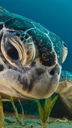 I LOOOOOVE Turtles!! <3 :)
