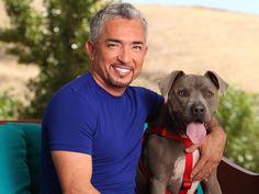 Cesar Millan and pitbull Junior http://www.pups-seeking-homes.com/blog/home/resource/images/CesarMillan-Junior.jpg