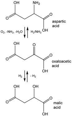 Ze is zuurstof koolstof waterstof stikstof calcium en fosfor ze is zuurstof koolstof waterstof stikstof calcium en fosfor dezelfde elementen die we allemaal in ons dragen maar ik kan het idee niet van ccuart Gallery