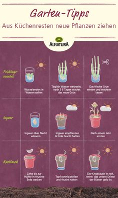 Pflanz- und Gartentipps – Alnatura - Pflanzen ideen Planting and gardening tips Alnatura Easy Garden, Diy Garden Decor, Garden Sprinklers, Planting Vegetables, Garden Care, Garden Boxes, Plantation, Window Sill, Garden Projects