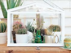 Mini-indoor-greenhouse-with-cactus-inside