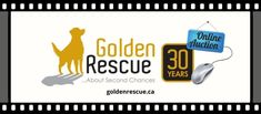Golden Events, Go Online, Online Bidding, Very Excited, 30 Years, Rescue Dogs, How To Find Out, Auction