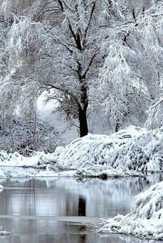 beautiful tree in winter Winter Szenen, I Love Winter, Winter Magic, Winter Time, Winter Christmas, I Love Snow, Let It Snow, Snow Pictures, Snow Photography