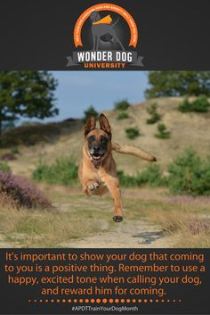 APDT Train Your Dog Month | APDT | Dog Training Tips | 30 Tips in 30 Days