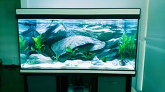 Création Aqua-Clean Aquariums, Creations, Freshwater Aquarium, Tanked Aquariums, Fish Tanks