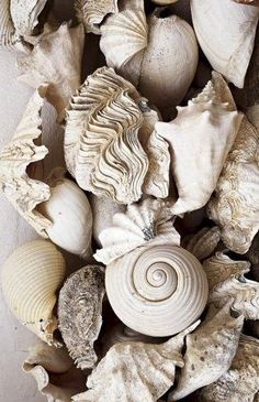 She sells seashells by the seashore. The shells she sells are surely seashells. So if she sells shells on the seashore, I'm sure she sells seashore shells. Natural Forms, Natural Texture, Au Natural, Ivy House, Photocollage, Cool Ideas, 31 Ideas, Shades Of White, Textures Patterns