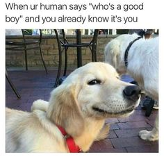 Funny Dogs Memes 28 Funniest Dog Memes - Best Viral Dog Jokes and Pictures - There's nothing a corgi can't fix. Cute Dog Memes, Dog Jokes, Animal Jokes, Funny Animal Memes, Cute Funny Animals, Funny Animal Pictures, Funny Cute, Funny Memes, Animal Pics