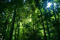 There Green Planet will create a tropical ecosystem with the biodiversity of more than plants and animals. Amazon Rainforest Trees, Daintree Rainforest, Rainforest Pictures, Rainforest Animals, Tropical Rainforest Climate, Rainforest Destruction, Reserva Natural, Tropical Forest, Waterfalls