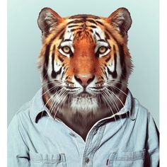 """Spanish photographer Yago Partal created this funny photographic project called """"Zoo Portraits"""", featuring animals dressed as humans. You can check out the full series and buy prints on his website. via Abduzeedo Zoo Portraits The Zoo, Zoo Animals, Funny Animals, Cute Animals, Animal Heads, Animal Faces, Portrait Wall, Pet Portraits, Art Tigre"""