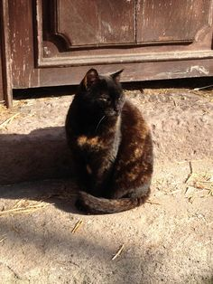 Ajda Kat - our first cat, came to us pregnant and gave birth in our kitchen! We hope she is sunning herself with the other kitty-cat angels. Love To Meet, Meeting New People, How To Introduce Yourself, Workplace, Birth, Angels, Cats, Kitchen, Gatos