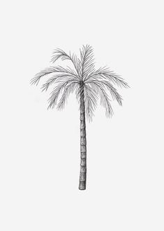 Bring some summer vibes in your home with this illustration of a palm tree! Drawing by inkylines.nl