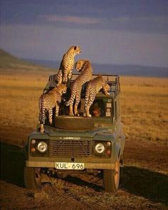 Land Rover and African Chitas in Kenia. App for Land Rover warning lights is now… Beautiful Creatures, Animals Beautiful, Cute Animals, Wild Animals, Artic Animals, African Animals, African Safari, Out Of Africa, Game Reserve