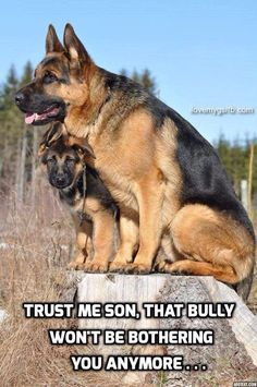 Pop's taking care of pup! #dogs #pets #GermanShepherds #puppies Facebook.com/sodoggonefunny