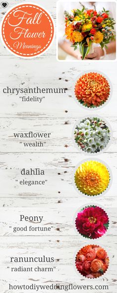 Wedding Trends! FALL FLOWERS - Names of the best FALL flowers and their meanings! . How to make a Fall Wedding Bouquet. #fallwedding #diyflowers #weddingflowers #weddinggreenery #weddingtrends #fallweddingflowers #FLOWERnames #diywedding #weddingcolors #flowercolors