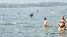 Pies chodzi po wodzie? #pies #chodzi #po wodzie