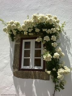 For interior ivy wall with floral window.. so pretty