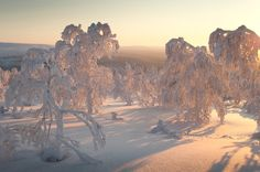 Wonderland by Nina Lindfors, via Behance Amazing Pics, Winter Wonderland, Monument Valley, Behance, Nature, Travel, Behavior, Viajes, Naturaleza