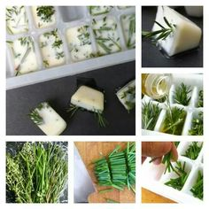 Herbs in ice