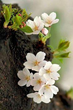 Blossom Garden - Paradise of Flowers!