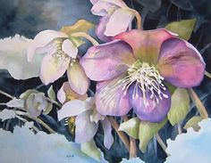 Christmas rose - Yahoo Image Search Results