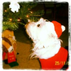 Shelby's 2nd Christmas, making her wish to Santa!!