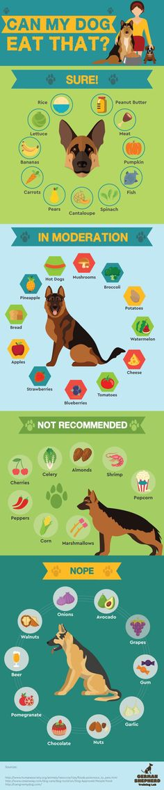 Safe Human Food For Your Dogs Info Graphic - Tap the pin for the most adorable pawtastic fur baby apparel! You'll love the dog clothes and cat clothes! Everything you want to know about GSDs. Training, health and beauty recommendations. Funny videos and Dog Health Tips, Pet Health, Dog Care Tips, Pet Care, Animals And Pets, Cute Animals, Dog Facts, Dog Eating, Shepherd Dog