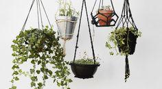 Deze 6 planten kun je onmogelijk dood laten gaan - Roomed