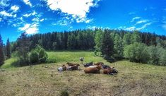 Laitumilla.  #europe  #instafinland  #sipoo  #sipoonkorpi  #alltags_member  #traveling  #loves_finland  #finnishboy  #finland_photolovers  #landscape_lovers  #finland4seasons  #travelphotography  #instatravel  #finland_frames  #igscglobal  #fotofanatics_nature_  #thisisfinland  #discoverfinland  #igscandinavia  #ig_week_finland  #Loves_United_Finland  #fotofanatics_alltags_  #finnishmoments  #lovelyfinland  #thebestoffinland  #nature  #visitfinland  #unlimitedscandinavia  #beautyofsuomi…