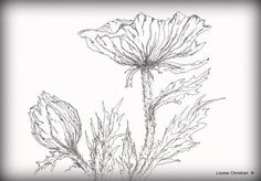 PEN & INK...POPPY SIMPLICITY..I felt like going back to my first love in Art, which is Pen & Ink.  No predrawing...just a Ballpoint Pen here.  I will probably put some red on it soon...