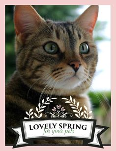 """I deserve a new cat tree, isn't it? Let's play with Zolux and Yummypets! Just follow the steps below: Follow Zolux on Pinterest: http://ymp.io/u/Dlm / Follow Yummypets on Pinterest: http://ymp.io/u/tvb / Follow the board """"Lovely spring for your pets !"""": http://ymp.io/u/sei / Repin the products you want / Results on April 13th 2015. GOOD LUCK! #game #pets #rodent #bunny #petsupply #gift #pinterest #yummypets #zolux"""