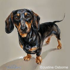 Dachshund Study A Limited edition print by Justine Osborne at the Stockbridge Gallery Dogs in Art