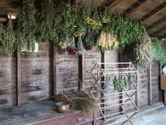 Drying Herbs - Herbs - Dried Herbs - Barn