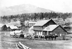 Ox Team - Clinton - 136 miles above Yale - City of Vancouver Archives 1871 Canadian Pacific Railway, Canadian History, History Facts, Ox, British Columbia, Vancouver, 19th Century, Past, Canada