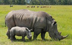 10 Most Endangered Animals - List of Species. (IUCN Red List). More on endangeredsp.com