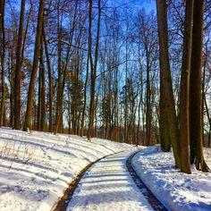 🌞#sun #day #sunlight #blue #bluesky #white #snow #road to #beautyful #winter #wonderful #mood #tree #forest #park ❄️⛄️🛷⛷🏂⛸🌲