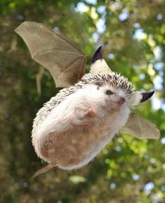 Oh a Nergigante Monster Hunter Memes, Monster Hunter World, Animals Of The World, Animals And Pets, Funny Animals, Funny Animal Pictures, Cute Pictures, Baby Hedgehog, Cute Little Animals