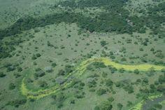 Serengeti from above. Personal photo Marie-Lys. Tanzania.