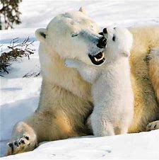 Baby Polar Bear Playing